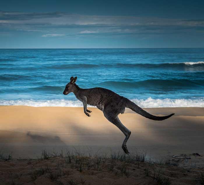 Kangaroo Island e Adelaide