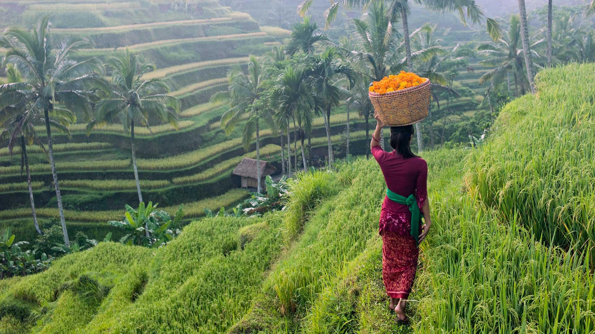 Bali Classica