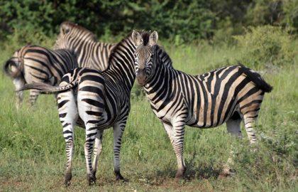 sudafrica e mauritius